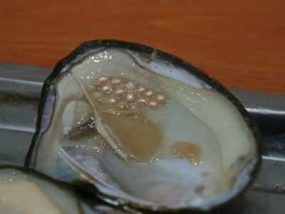 Pearl – What is it?