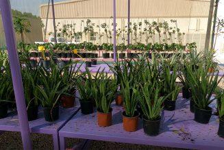 Gardening – Dubai Nurseries