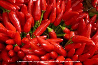 Chili-Pepper Effect