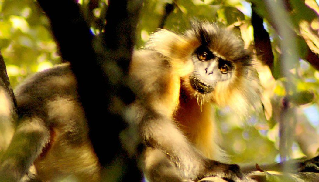 Manas National Park – Assam