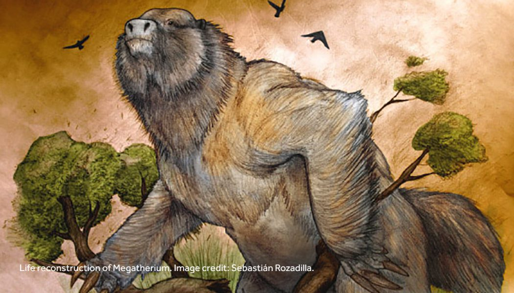 3.58 Million Year-Old Megatherium Fossil Discovered