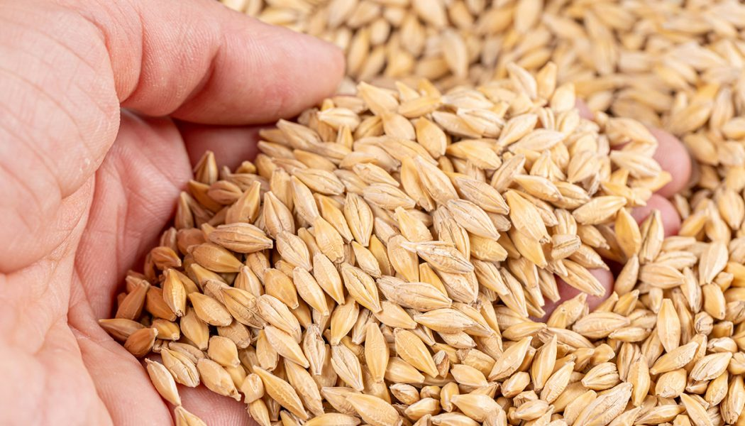 Whole Grain Vs Refined Grain