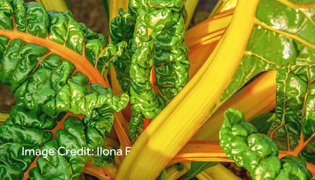 Green Leafy Vegetables and Cardiovascular Diseases