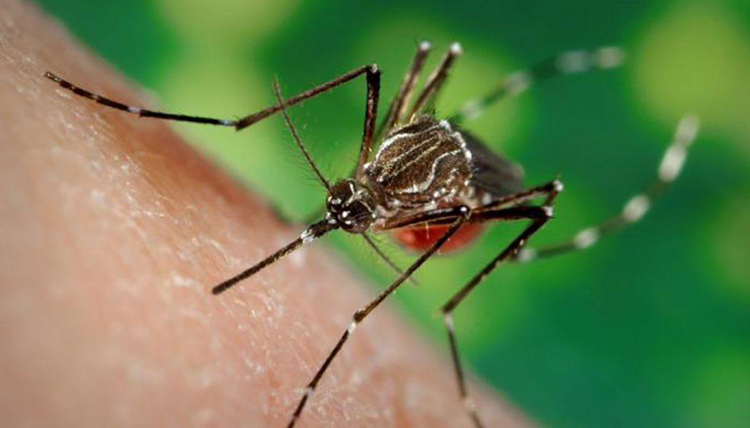 Mosquitoes and our Health