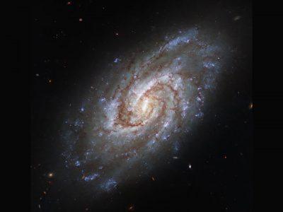 Spiral Galaxy IC 1954