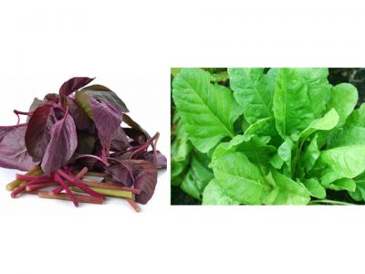 Benefits of Palak or Spinach